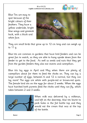 Preview of worksheet Blue tit