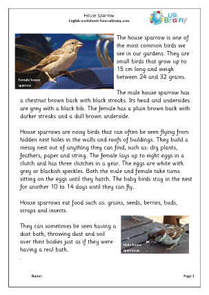 Preview of worksheet House Sparrow