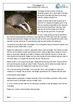 Badgers (3)