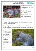 Grey Squirrels (1)