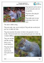 Grey Squirrels (1)