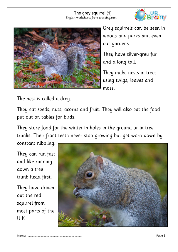 Preview of 'Grey Squirrels (1)'
