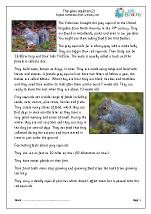 Grey Squirrels (2)