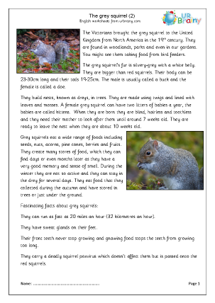 Preview of worksheet Grey Squirrels (2)