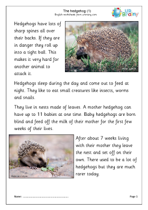 Hedgehogs (1)