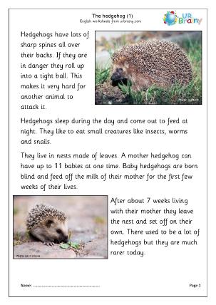 Hedgehogs (1)