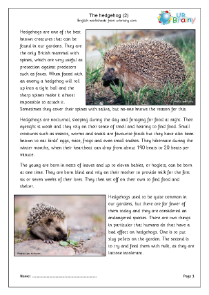 Hedgehogs (2)
