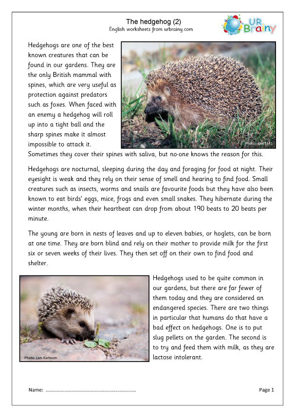 Preview of 'Hedgehogs (2)'