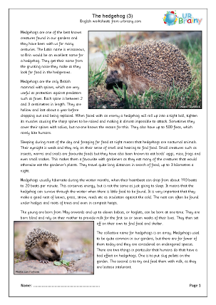 Hedgehogs (3)