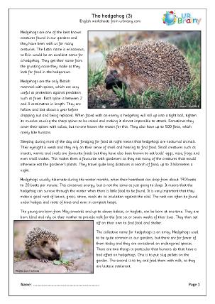 Hedgehogs (3)