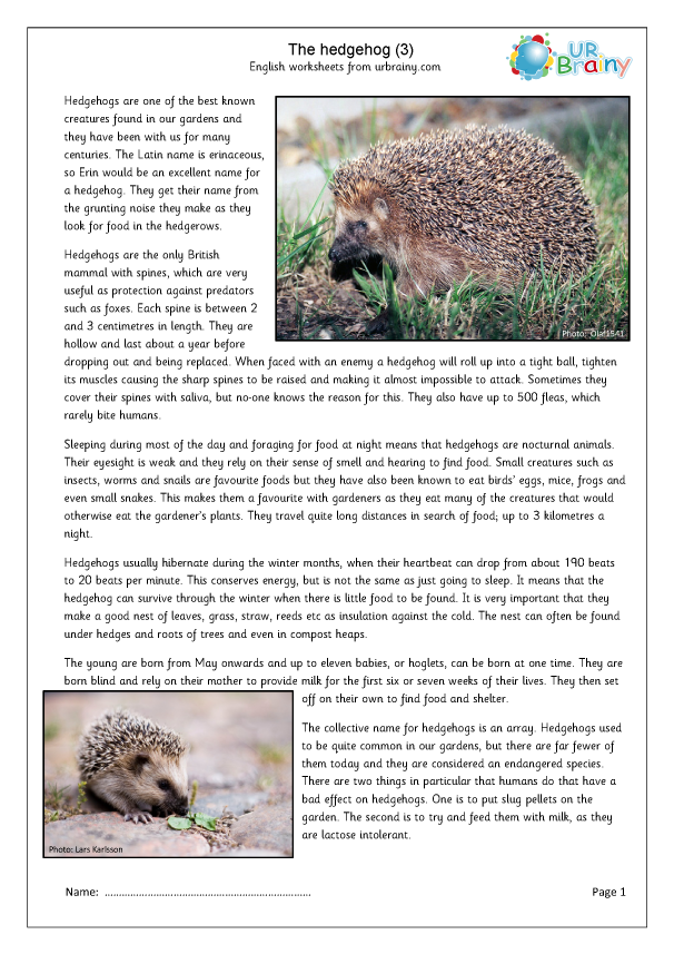 Preview of 'Hedgehogs (3)'