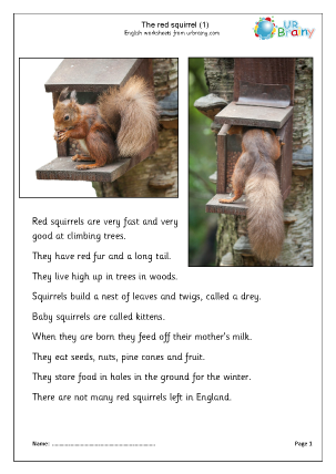 Preview of worksheet Red squirrels (1)