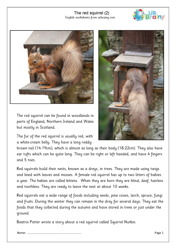 Preview of 'Red Squirrel (2)'
