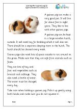 Guinea Pigs  1