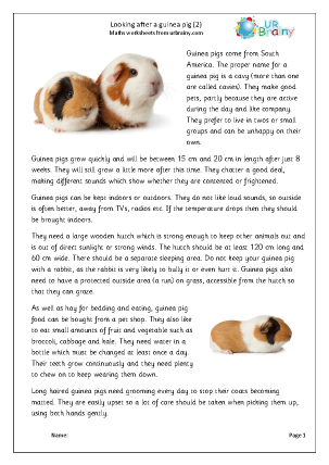 Preview of worksheet Guinea Pigs 2