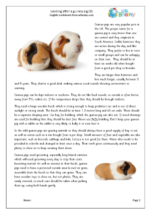 Preview of worksheet Guinea pigs 3