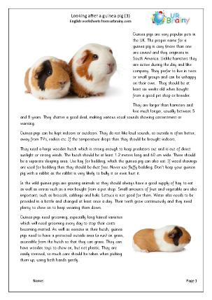 Guinea Pigs 3