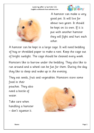 Preview of worksheet Hamsters 1