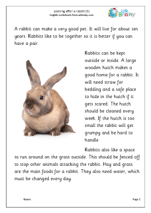 Preview of worksheet Rabbits 1