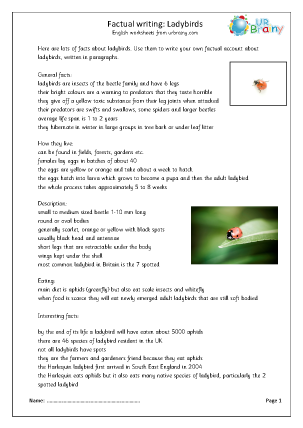 Preview of worksheet Minibeasts: ladybirds