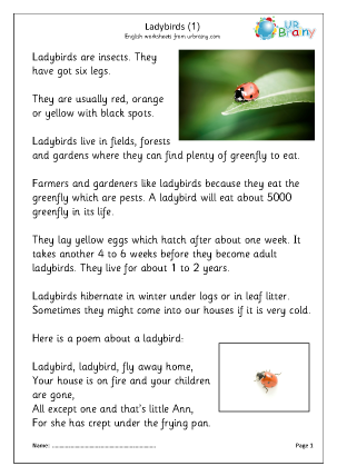 Preview of worksheet Ladybirds (1)