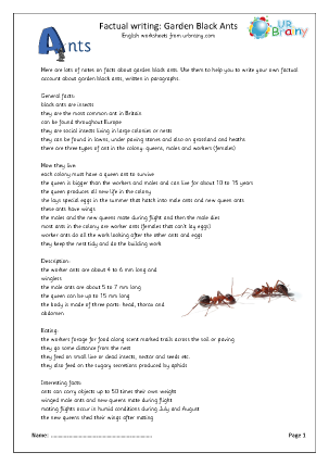 Preview of worksheet Minibeasts: garden black ants