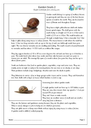 Preview of worksheet Garden snails (2)
