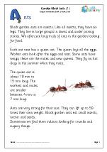 Garden black ants (1)