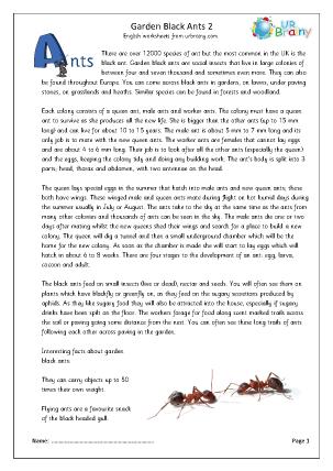 Garden black ants (2)