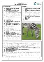 Zoo animals: zebras