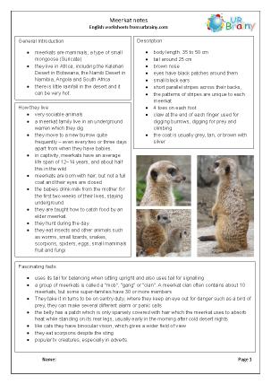 Zoo animals: meerkats