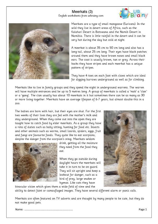 Preview of 'Meerkat 3'