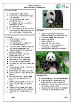 Zoo animals: giant pandas