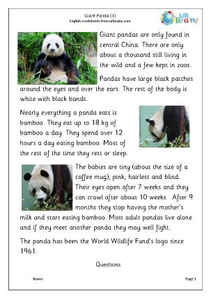 Preview of worksheet Giant panda 1