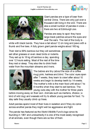 Preview of worksheet Giant panda 2
