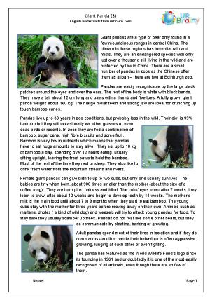 Preview of worksheet Giant panda 3