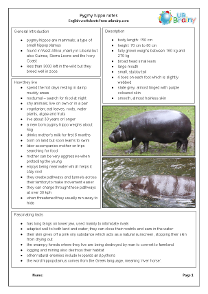 Preview of worksheet Zoo animals: pygmy hippos