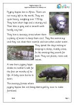 Pygmy hippo 1