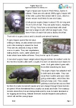 Pygmy Hippo 2