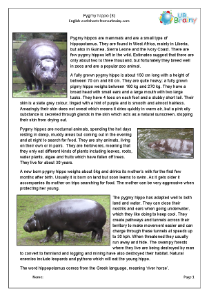 Preview of worksheet Pygmy hippo 3