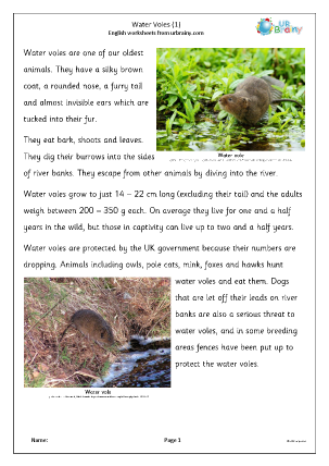 Preview of worksheet Water Voles (1)