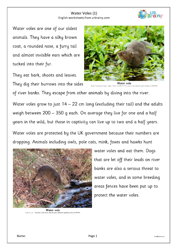 Preview of 'Water Voles (1)'