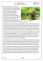 Water Voles (3)