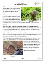 Water Voles (2)