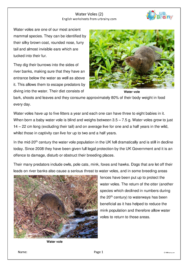 Preview of 'Water Voles (2)'
