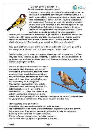 Preview of worksheet Goldfinch 3
