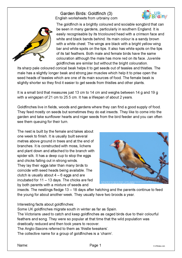 Preview of 'Goldfinch 3'
